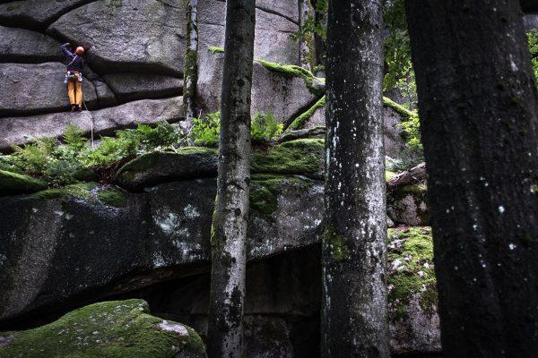Grüner Wald. Klettern | Pauli Trenkwalder, Berge & Psychologie