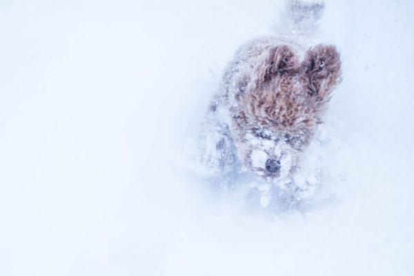 Lulu. Schneegstöber, Winter | Pauli Trenkwalder, Berge & Psychologie